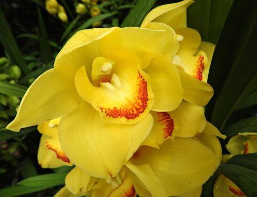 Orchidea. Ako jej pomôcť zvládnuť blížiace sa zimné obdobie?
