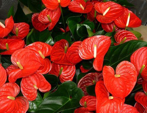 Ochrana izbový rastlín pred smútivkami