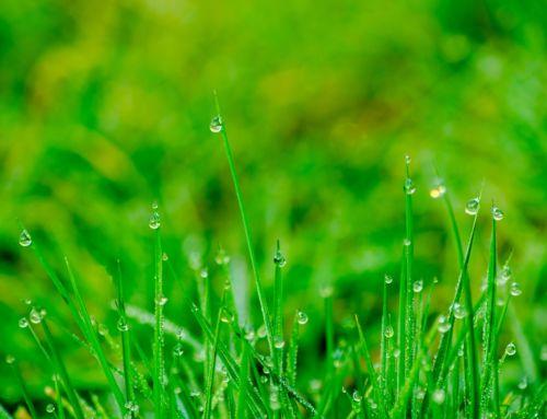 Výsev trávnika na prelome leta a jesene
