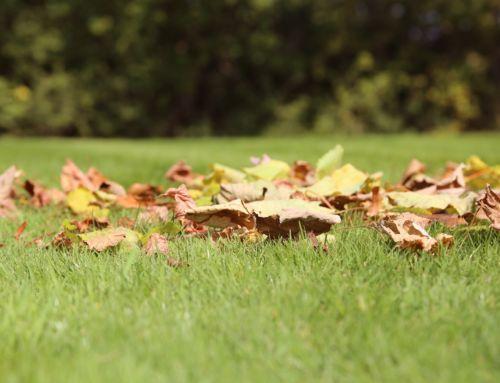 Doprajte trávniku jesenné hnojenie, posilnite ho pred zimou