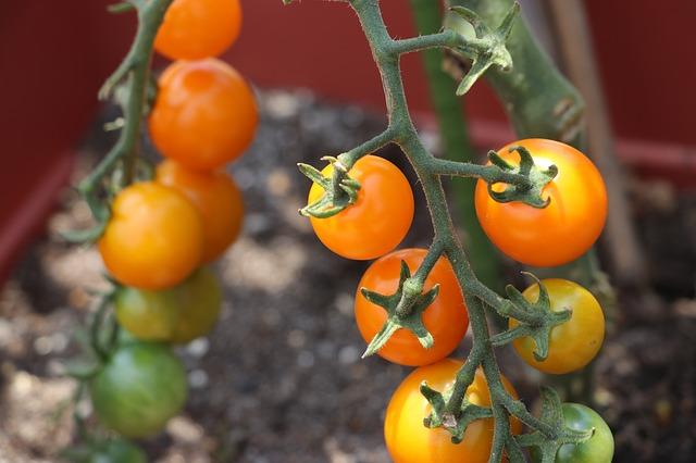 Vplyv teplého počasia na našu záhradu