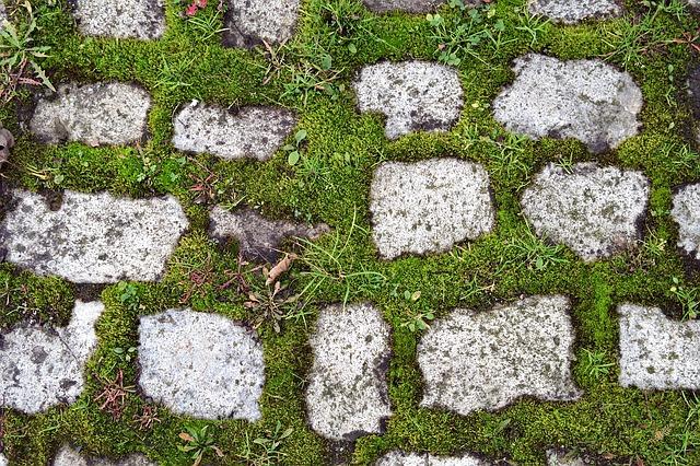 Mach v trávniku – ako ho odstrániť rýchlo a jednoducho